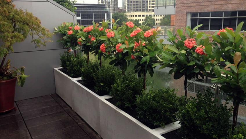 3 Φυτά Βεράντα Σπιτιού που δεν Απαιτούν Νερό